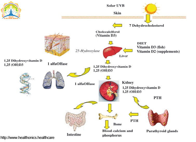 What is Vitamin-D? - Healthonics