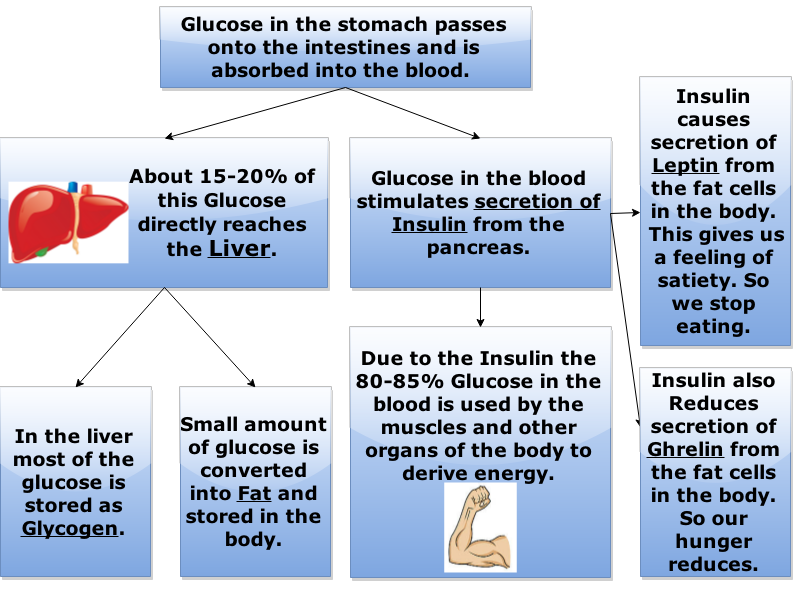 sucrose-in-the-food